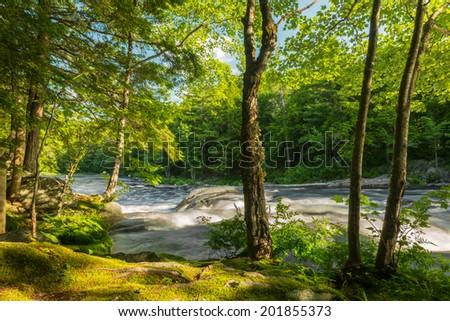 River in the forest (Kejimkujik National Park , Nova Scotia, Canada) - stock photo