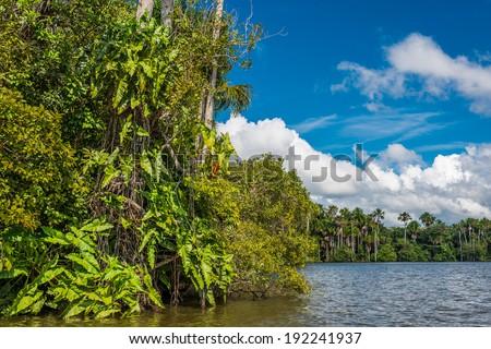 river in the peruvian Amazon jungle at Madre de Dios Peru - stock photo