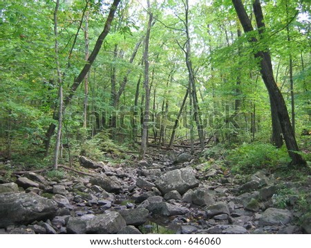 River in woods - stock photo