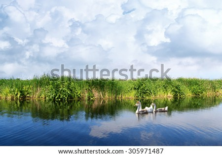 River landscape, cloudy sky, the waves on the water, geese on water, green tourism, travel along the river, boating, river flora and fauna, summer cloudy day, aquatic vegetation. - stock photo