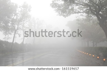 Road and tree in foggy and raining day, mist. - stock photo