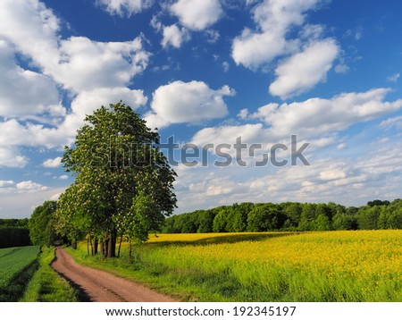 Road, chestnut and rapeseed field - stock photo