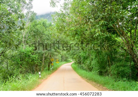 Road curve concrete among tree in the forest - stock photo