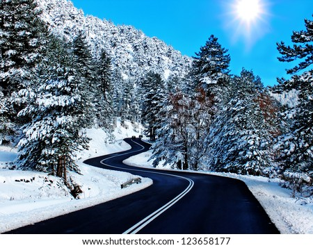 road firs sun snow xmas - stock photo