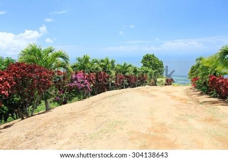 Road hill tropical flora sky mountains in Dominican republic island palms Bougainvillea bushes beautiful highland latin america - stock photo