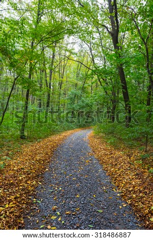 road in a autumn forest - stock photo