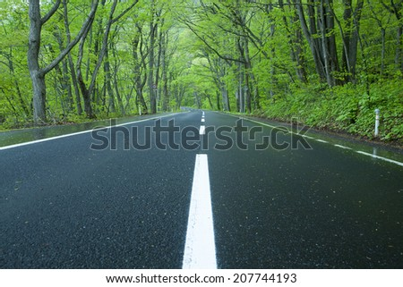 Road in a green forest - stock photo