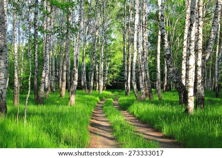 road in a spring birch grove - stock photo