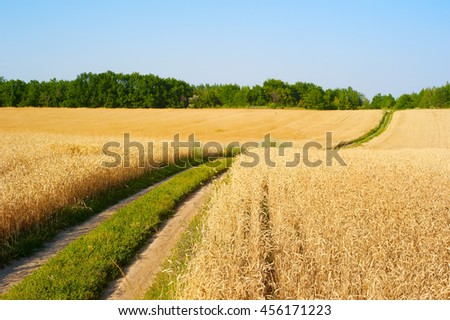 Road in a wheat field. Focus on foreground. Ukraine - stock photo