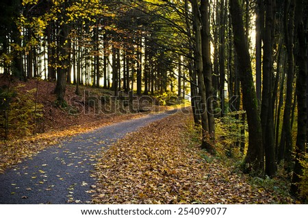Road in dark forest during the autumn - stock photo