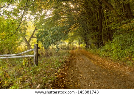 Road in the autumn forest - stock photo