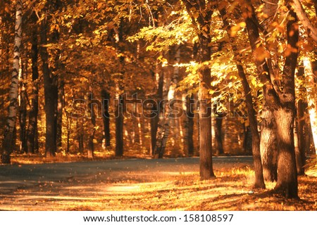 Road in the autumn forest sun - stock photo