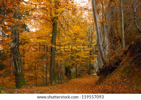 Road in the autumn forest with beautiful trees - stock photo