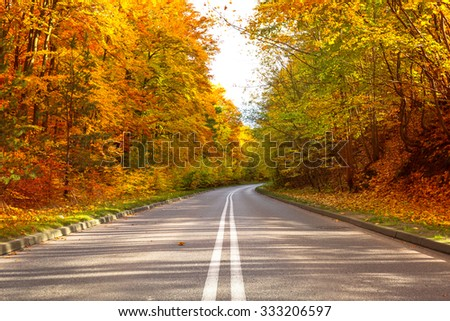 Road in the autumnal forest - stock photo