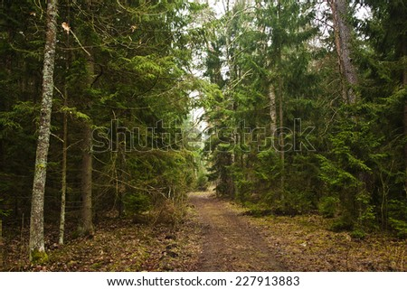 road in the dense forest  - stock photo