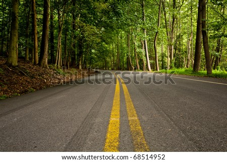 Road in the forest - stock photo
