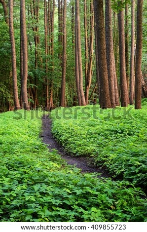 Road in the  forest at the sunset - stock photo