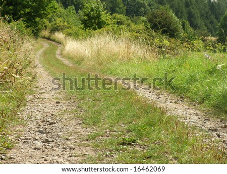 road in the forrest - stock photo