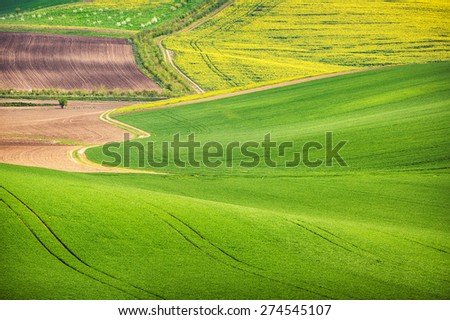 Road in the green field waves, South Moravia, Czech Republic - stock photo