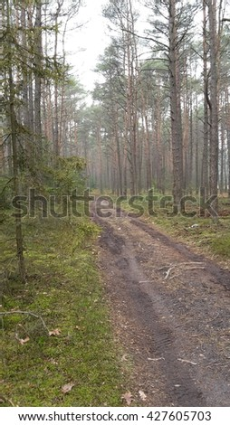 Road in the morning forest  - stock photo
