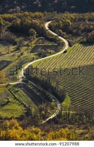 Road in the Motovun valley - stock photo