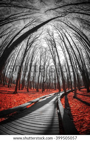 road in the red forest. Mystical landscape. three colors black white red - stock photo