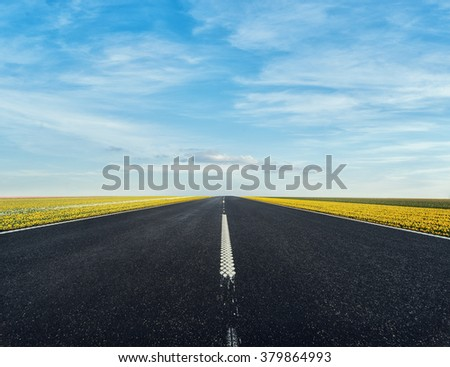 Road in the Tulips fields in Netherlands - stock photo