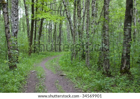 road in the wood - stock photo