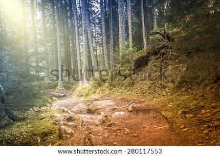 Road in the woods, retro filtered, vintage magic style - stock photo