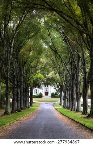 Road lined with a canopy of green trees leading to an old white plantation home with a red door. - stock photo
