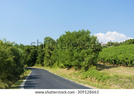 Road next to the vineyard in summer time - stock photo
