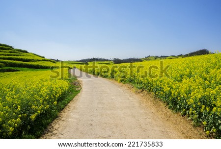 Road on yellow rapeseed field in Luoping, China. Luoping is famous for rapeseed fields. Luoping is where many tourists Vietnam. - stock photo