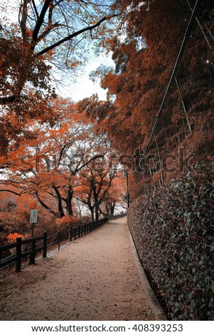Road path way automn in Japan - stock photo