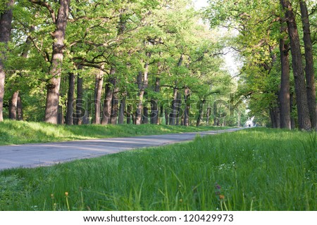 road receding into the distance between the great oaks, spring nature - stock photo