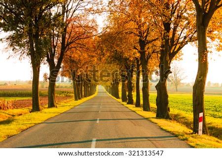 Road running through autumn fall tree alley. Beautiful autumnal landscape, orange foliage - stock photo
