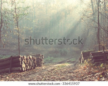 Road through a beautiful colorful forest in autumn. Vintage filter effect - stock photo