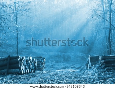 Road through a beautiful forest in autumn. Blue filter effect - stock photo