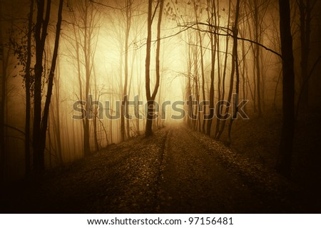 road through a fantasy forest at sunset - stock photo