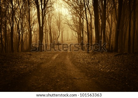 road through a golden forest - stock photo
