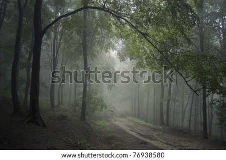 road through a green forest - stock photo