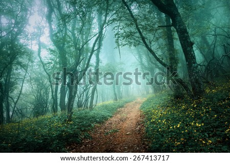 Road through a mysterious dark forest in fog with green leaves and yellow flowers. Spring morning in Crimea. Magical atmosphere. Fairytale - stock photo
