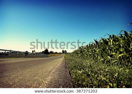 Road through corn field - stock photo