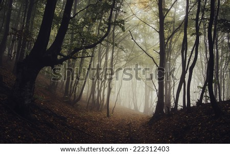 road through dark forest in autumn - stock photo