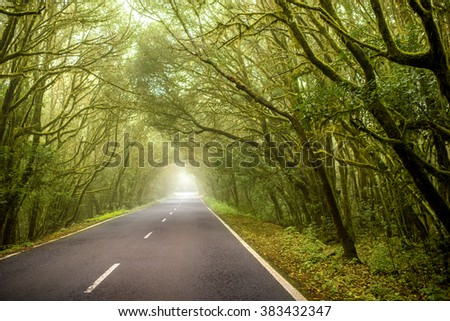 Road through evergreen forest in Garajonay national park on La Gomera island in Spain - stock photo