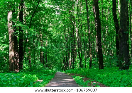 road through the dense forest - stock photo