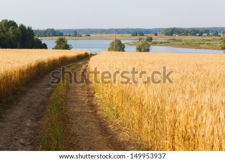 road through yellow wheat ears on the field - stock photo