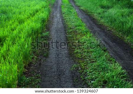 road throw the green wheat land - stock photo