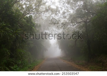 Road trough the fog in a endemic tropical forest, Reunion Island. - stock photo