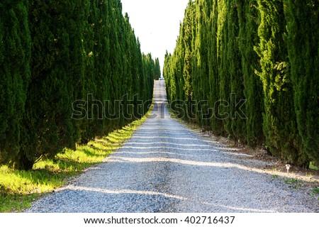 Road with cypresses near Volterra, Tuscany-Italy - stock photo
