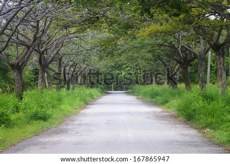 Road with tunnel of trees - stock photo